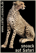 snoack auf Safari Banner 1